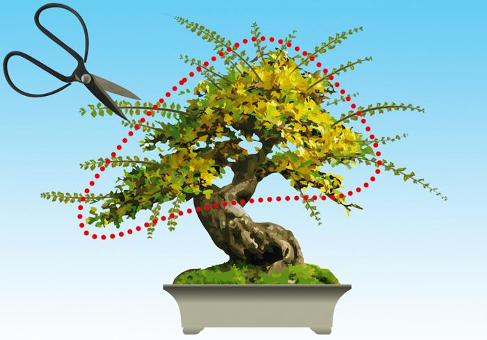 Cuidados a ter com seu bonsai - Como cuidar bonsais ...